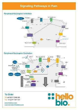 Signaling pathways in pain